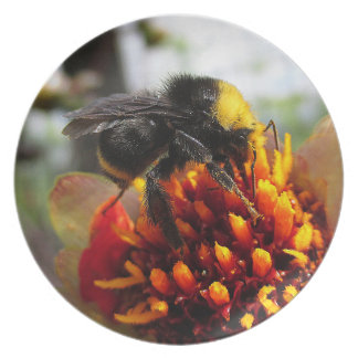 Bumblebee on Dahlia Plate