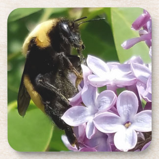 Bumblebee  On Lilac close up by djoneill Coaster