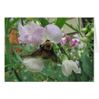 Bumblebee on Sweet Pea Card