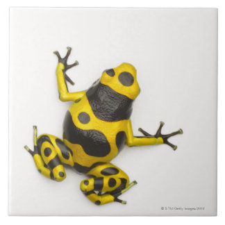 Bumblebee Poison Dart Frog Ceramic Tile