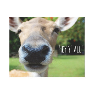 Bump the Nosey! Hey y'all! Close-up Smiling Deer. Canvas Print