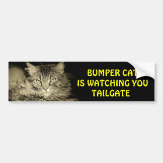 Bumper Cat is watching TAILGATE 24 Bumper Sticker