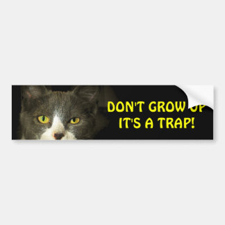 Bumper Cat Says Don't Grow Up Meme Bumper Sticker