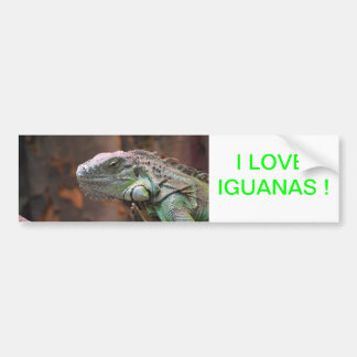 Bumper Sticker with colourful Iguana lizard