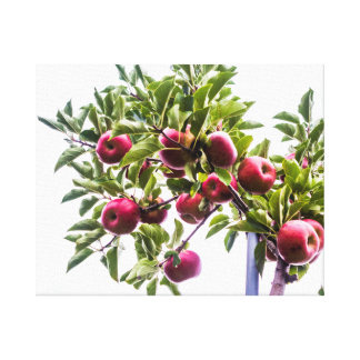 Bunch of Apples Canvas Print