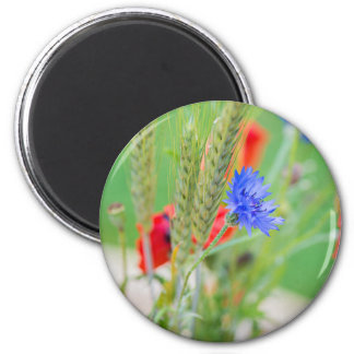 Bunch of of red poppies, cornflowers and ears magnet