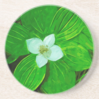 Bunchberry White Wildflower Drink Coasters