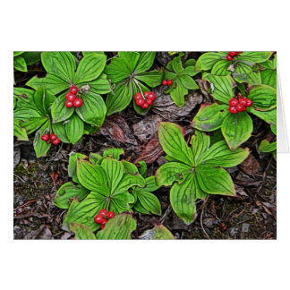 Bunchberry With Berries Greeting Cards