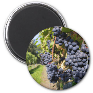 Bunches of blue grapes with path 6 cm round magnet