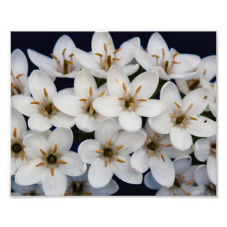 Bunches of white flowers photo print