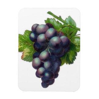Bundle Of Grapes Vinyl Magnet