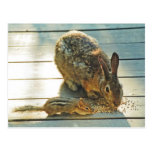 Bunny and Chipmunk Sharing Post Cards