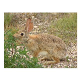 Bunny At Supper Postcard