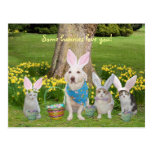 Bunny Dog with Bunny Cats Postcard