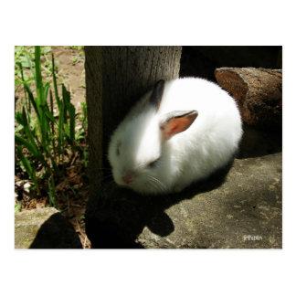 Bunny Dreams postcards