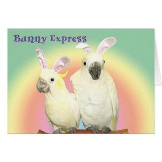 Bunny Express Card