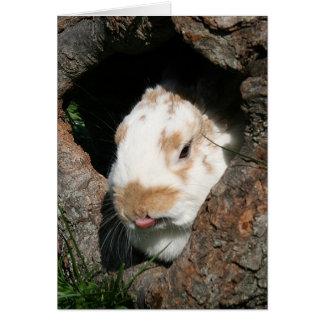 Bunny humbug card