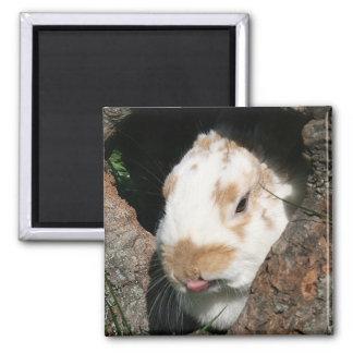 Bunny humbug magnet