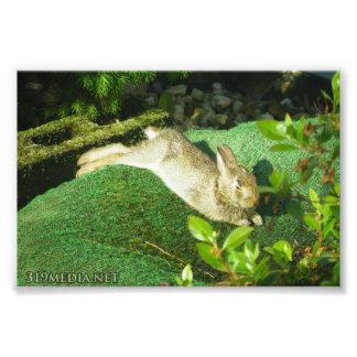Bunny in Repose Photo Art