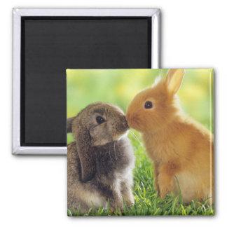 Bunny Kiss Magnet