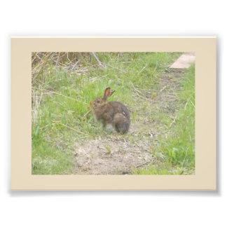 Bunny Photo Print