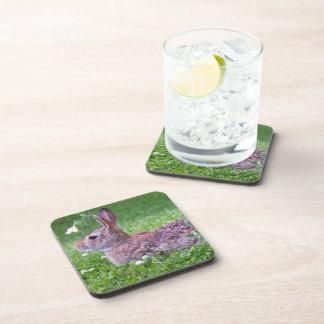 Bunny Rabbit in Grass Closeup Photo Coaster