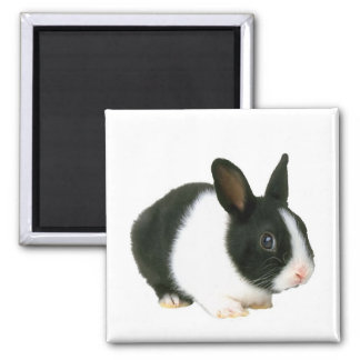 Bunny Rabbit Magnet