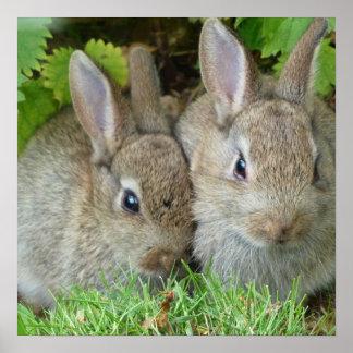 Bunny Rabbits Poster
