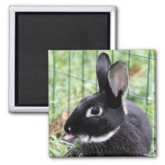 Bunny razzberry magnet