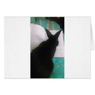 Bunny Reading Greeting Cards