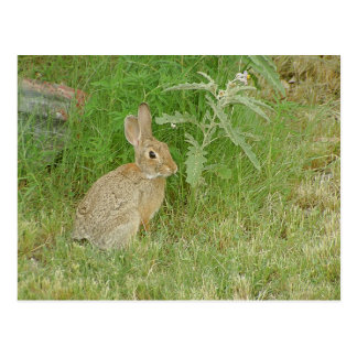 Bunny So Cute Postcard