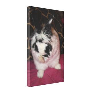 Bunny Washing Gallery Wrap Canvas