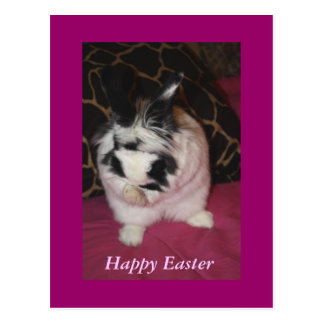 Bunny Washing Post Cards