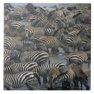 Burchell's zebras (Equus burchelli), Masai Mara, Large Square Tile