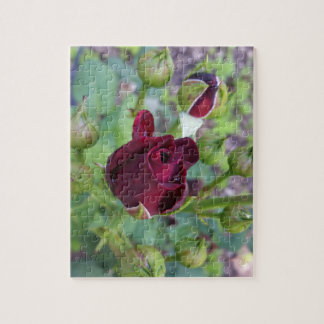 Burgundy rose after rain jigsaw puzzle