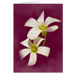 Burgundy Wine Card