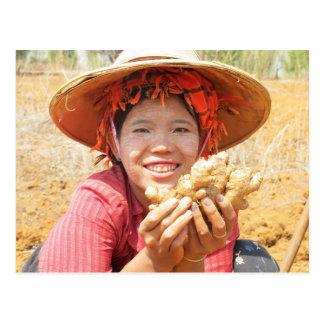 Burmese Lady Picking Ginger Postcard