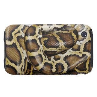 Burmese python iPhone 3 tough cases