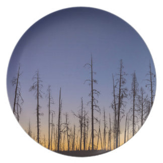 Burnt-Forest Plate