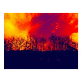 Burnt Savannah Stunning Trees Silhouette Postcard