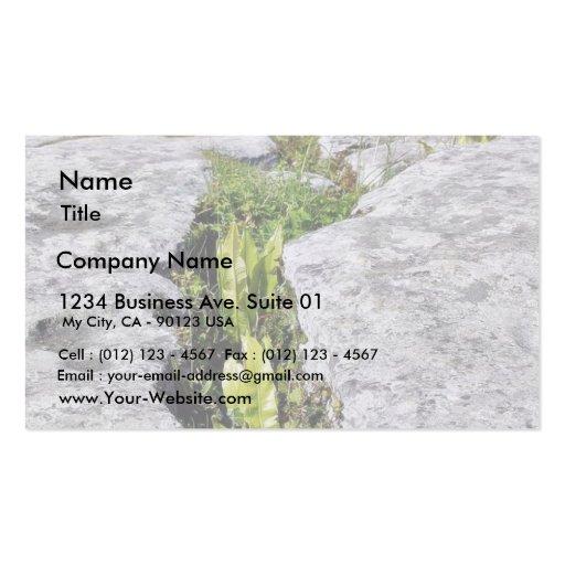 Burren Plants Limestone Rocks Business Card Template