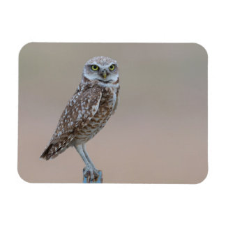 Burrowing Owl at Dusk Small Magnet