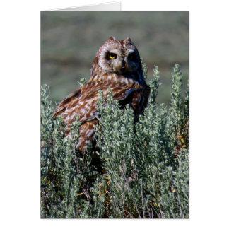 Burrowing Owl Card