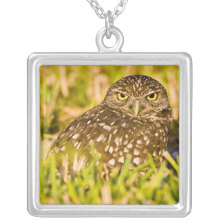 Burrowing owls are a popular site on Marco 3 Square Pendant Necklace