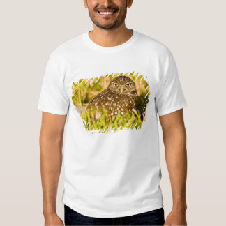 Burrowing owls are a popular site on Marco 3 Tee Shirt