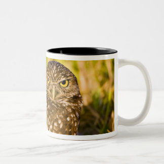 Burrowing owls are a popular site on Marco 3 Two-Tone Mug