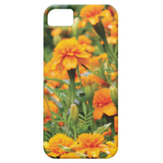 burst of orange color barely there iPhone 5 case