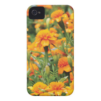 burst of orange color iPhone 4 case