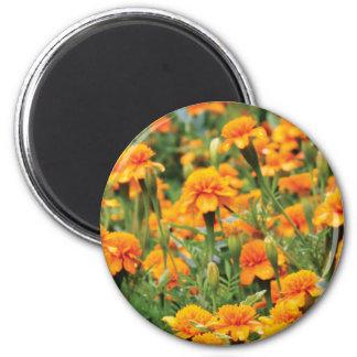 burst of orange color magnet