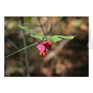 Bursting heart (Euonymus americanus) card